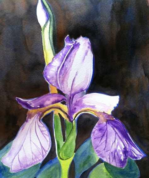 I paint An Iris But Dislike The Composition.