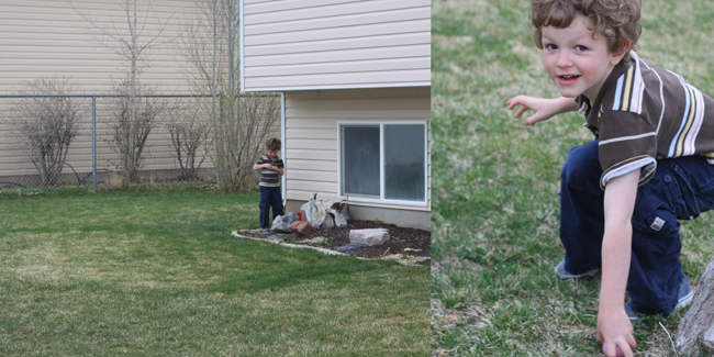 A little boy across the yard looking for eggs; closeup of boy finding Easter egg