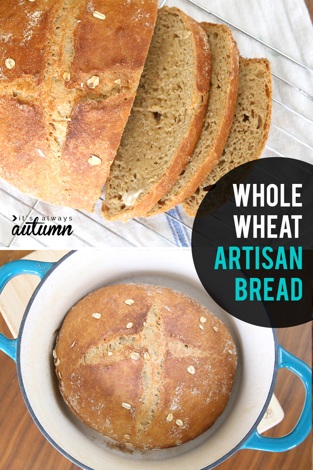 This whole wheat artisan bread only takes five ingredients! Plus it's super easy to make and doesn't even require kneading.