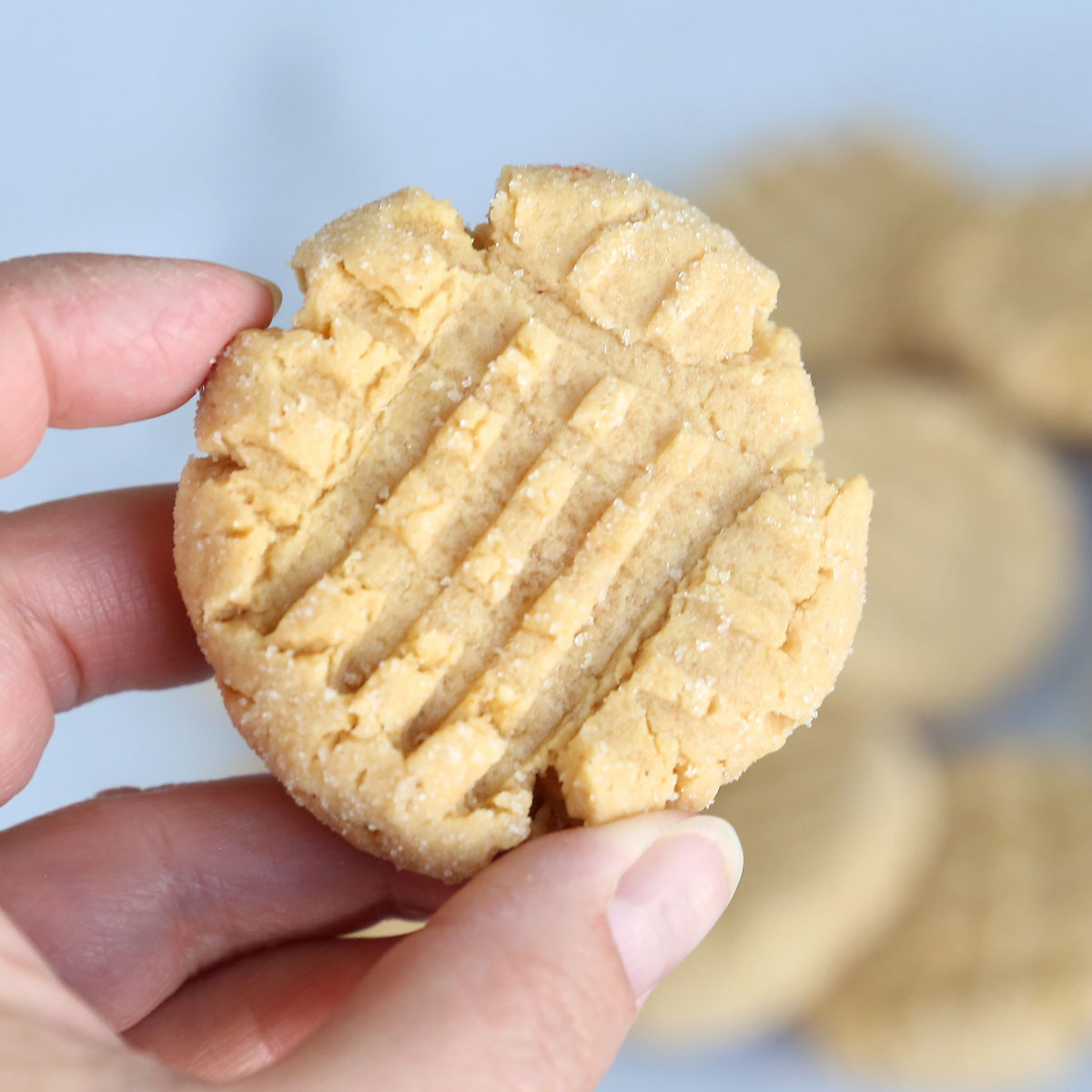 Hand holding a peanut butter cookie