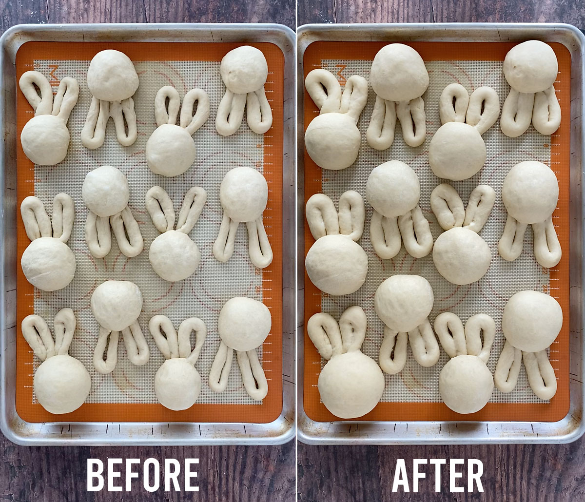 Tray of Easter bunny dinner rolls before and after the second rise