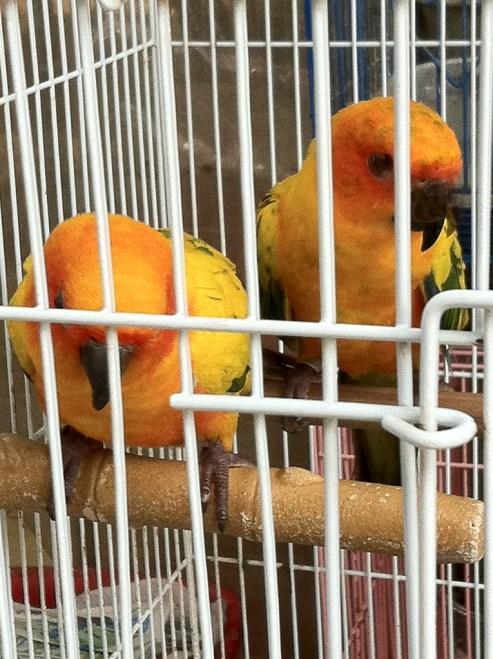 parrots at the Yuen Po Street Bird Garden HK