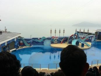 Sea Dreams-Dolphin's showcase