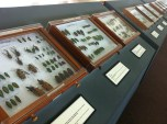 The insects collection