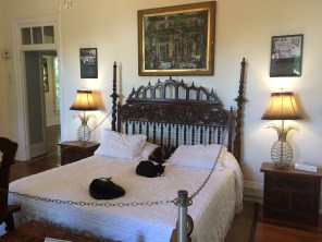 Key_West_Hemingway_Home_Cats_on_bed