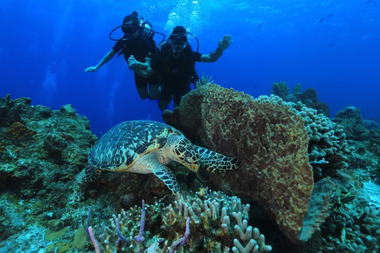 white sand beaches of cancun mexico, paradise island, resorts on hotel zone, cozumel, scuba diving, school of fish, sea turtle