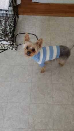 Do I look fat in this sweater?