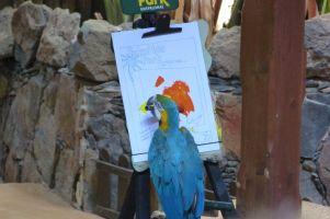 gran-canaria-palmitos-park