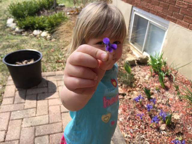 spring-violets