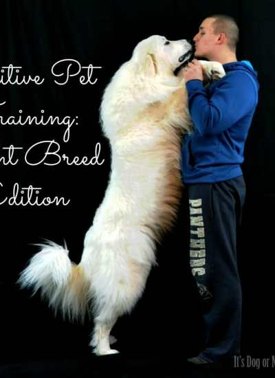 Positive Training for Giant Breeds