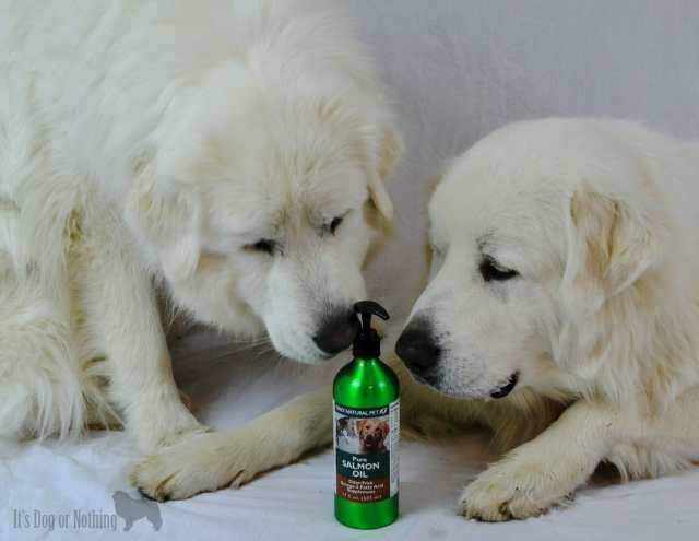 Salmon oil has many benefits for dogs. Only Natural Pet has a high quality affordable option to improve your dog's health.