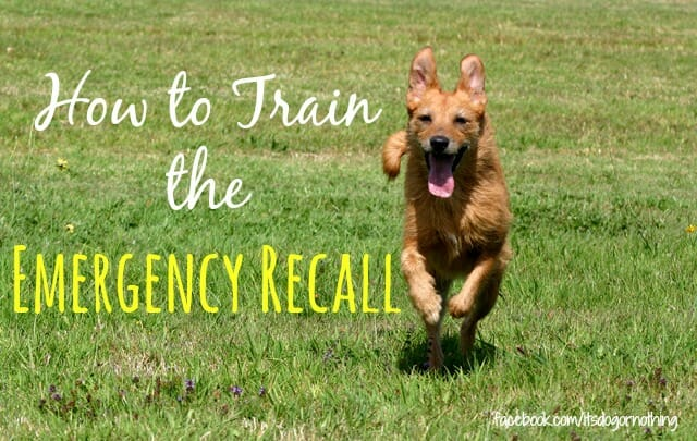 How to Train the Emergency Recall