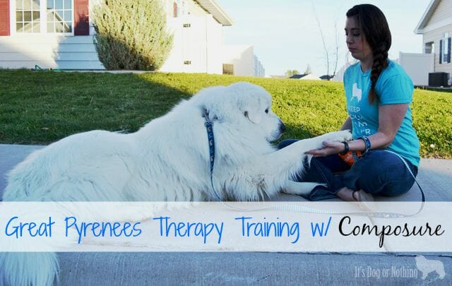 During our therapy dog training we've been using VetriScience Composure to help my Great Pyrenees focus.