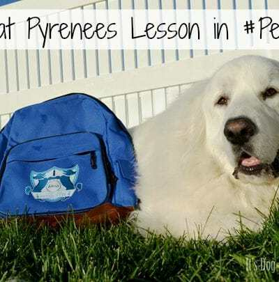 A Great Pyrenees Lesson in #Petiquette