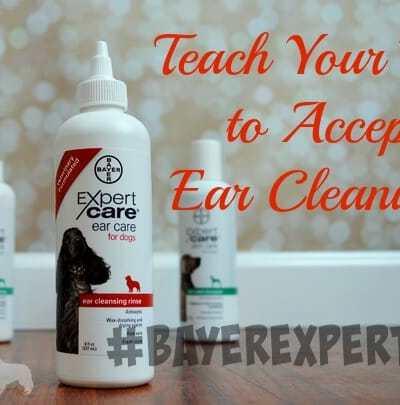 Teach Your Dog to Accept Ear Cleanings #BayerExpertCare