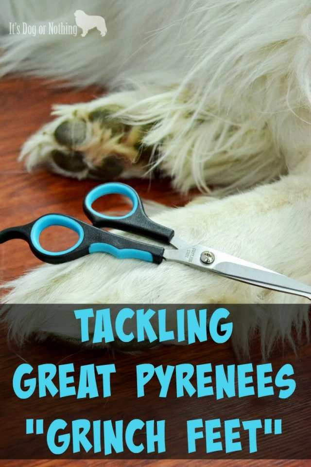 Using the Dog Grooming Scissors from Micio Micia to trim Great Pyrenees paws.