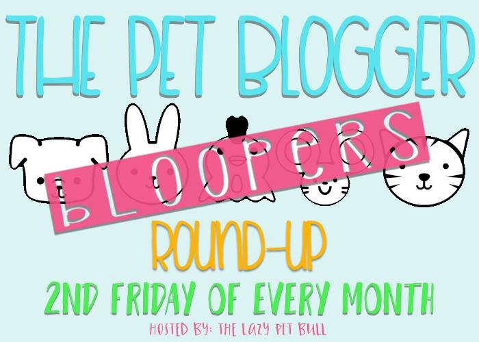 The Pet Blogger Bloopers Round-Up