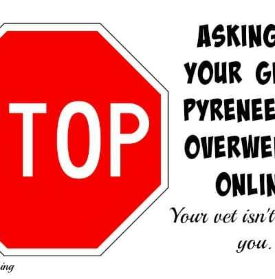Stop Asking If Your Great Pyrenees is Overweight Online