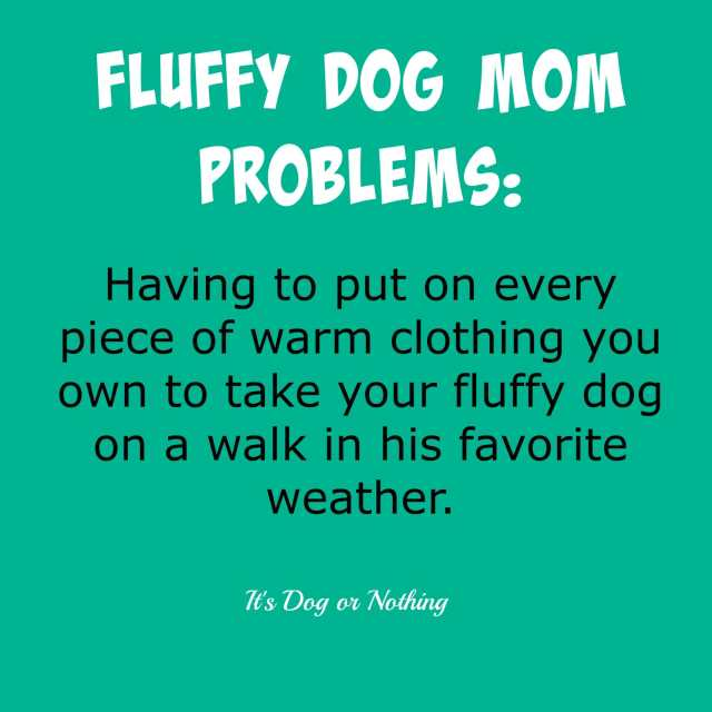 Fluffy Dog Mom Problems
