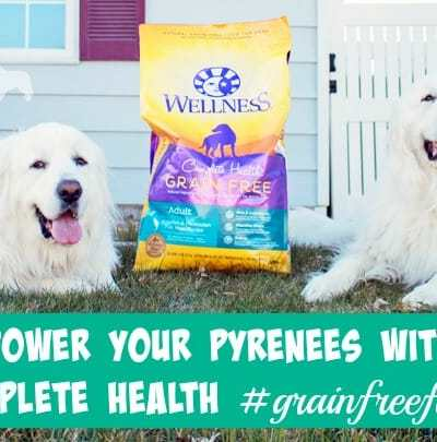 Power Your Pyrenees with Complete Health #GrainFreeForMe