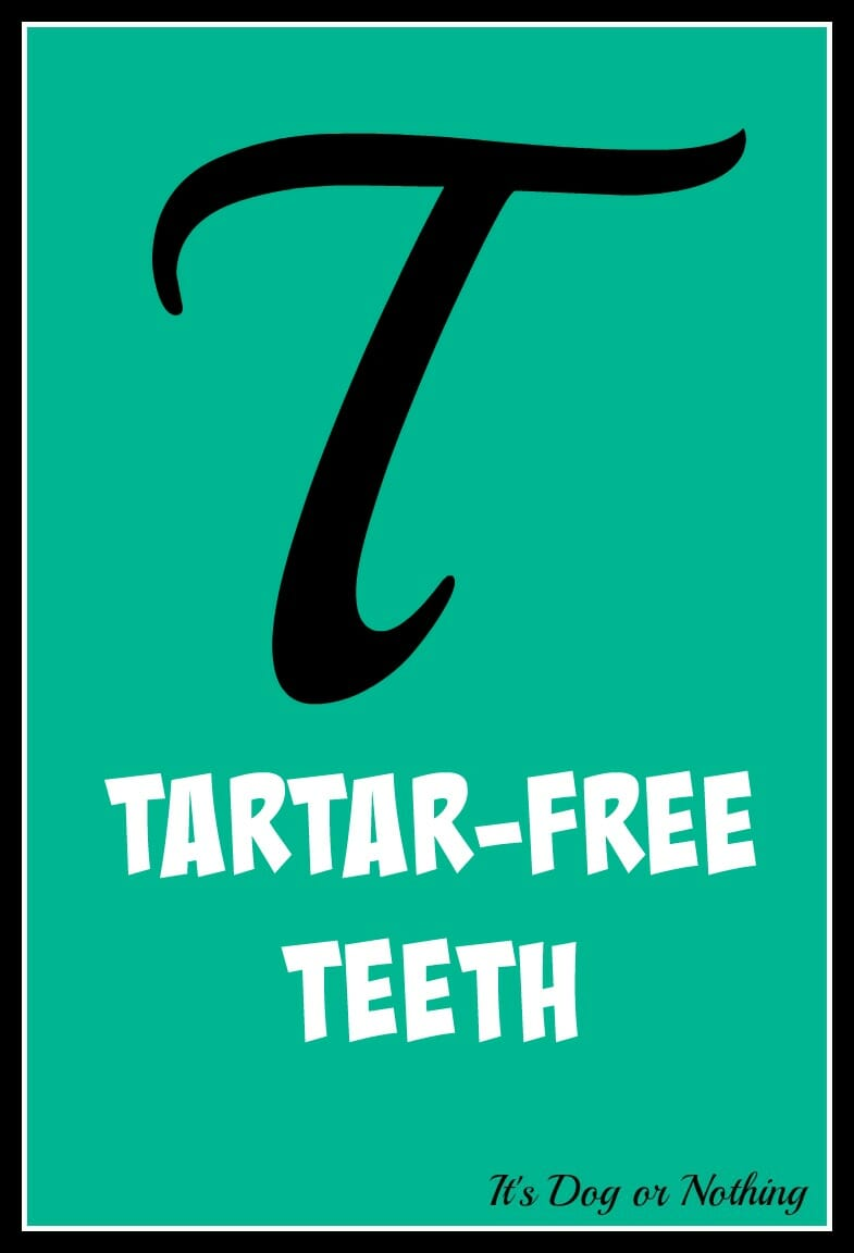tartar free teeth giveaway it 39 s dog or nothing. Black Bedroom Furniture Sets. Home Design Ideas