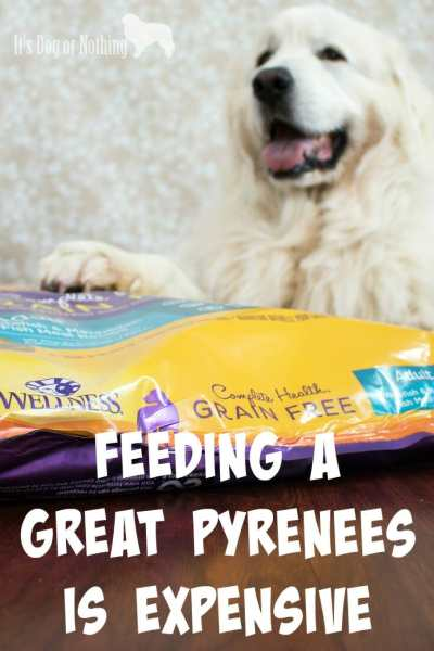"One of the first things I'm always asked about Great Pyrenees is, ""How much do they eat?"" Today, I'm answering that question and giving my recommendation for the perfect food."