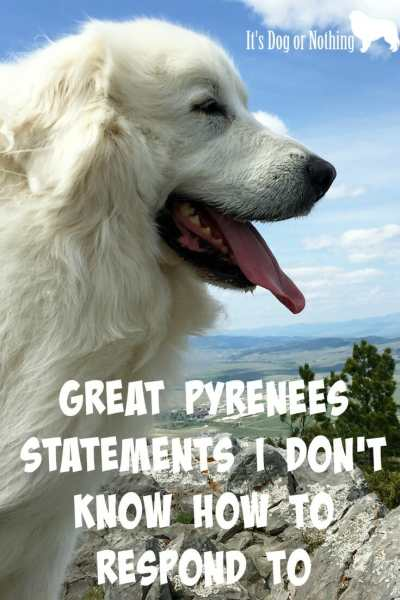 I absolutely love talking about Great Pyrenees, but sometimes people make comments I really don't know how to respond to.