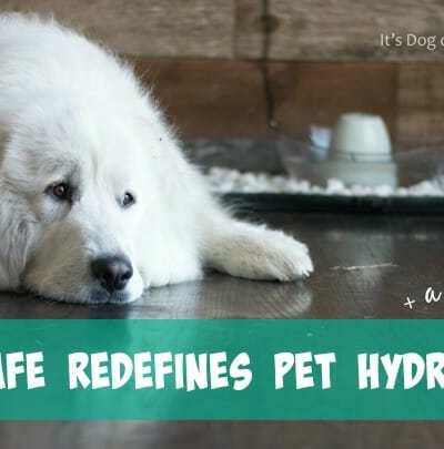 PetSafe Redefines Pet Hydration + DIY Water Bowl Upgrade