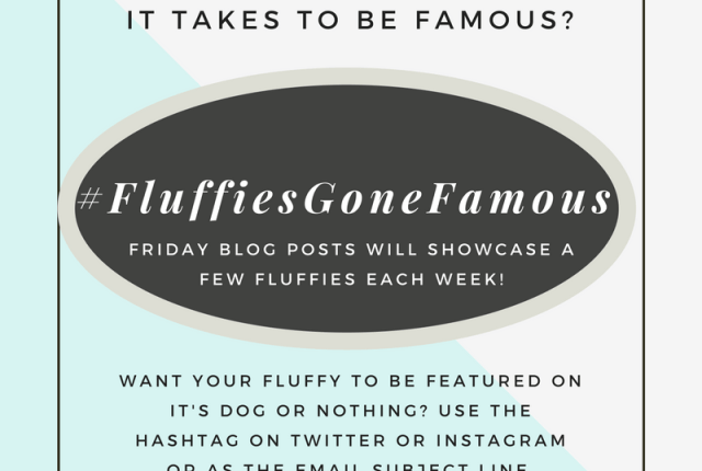 Want your dog to be featured on It's Dog or Nothing? Use #FluffiesGoneFamous on Instagram or Twitter to enter your photos!