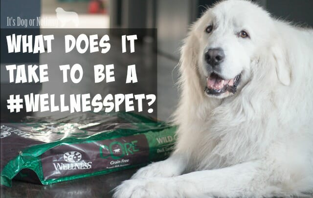Is your dog a #WellnessPet? Here's how I tell if my Great Pyrenees are showing the 5 Signs of Wellness.