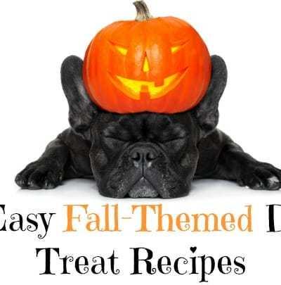 7 Easy Fall-Themed Dog Treat Recipes