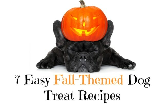 Looking to make your dog some homemade treats this fall or Halloween? We've rounded up 7 easy fall-themed dog treat recipes!