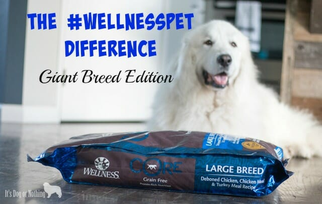"Do you feel completely comfortable with the food you are feeding your giant breed dog? While we feed a rotation diet that includes ""all life stages"" foods, large breed formulas are great for peace of mind about nutrients. Check out our preferred large breed formula!"