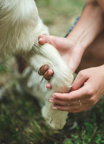 5 Must-Have Tools for Grooming Great Pyrenees