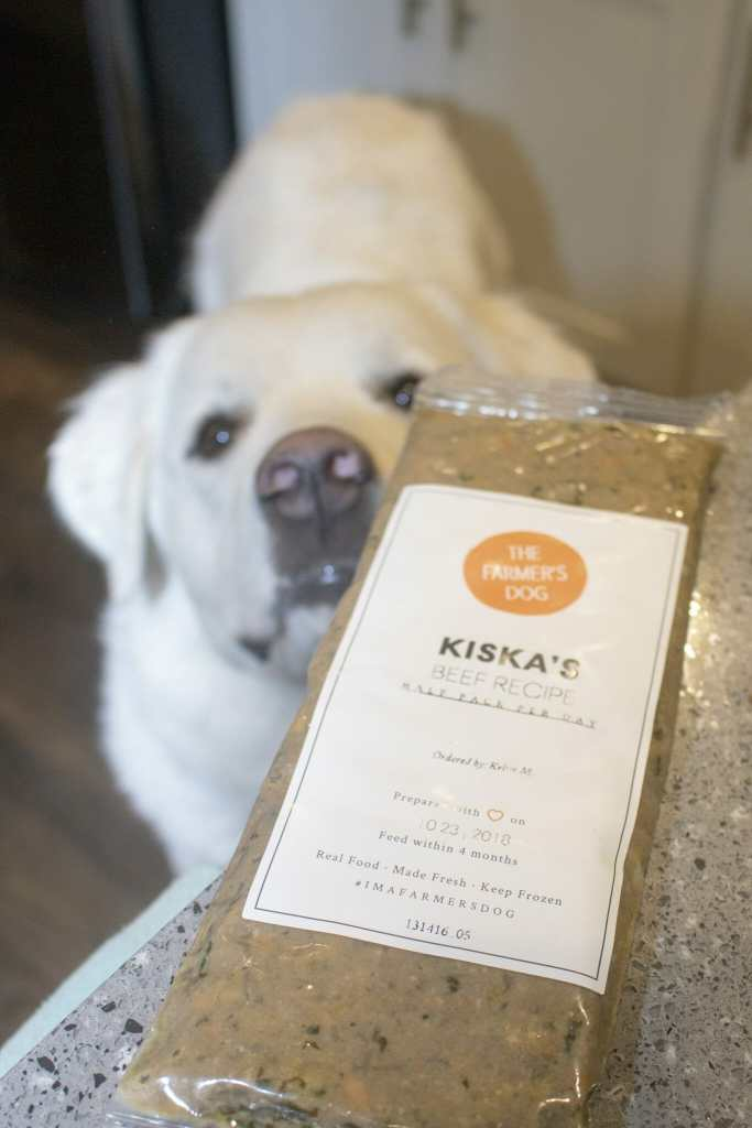 Feed fresh and keep your dog happy with The Farmer's Dog. It's a favorite for the Great Pyrenees at It's Dog or Nothing!