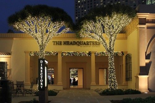 Sparkling lights on landscaping trees' trunks and branches