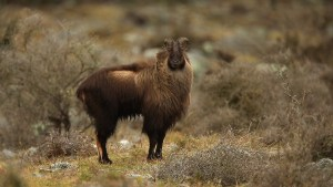 Ubutnu 14.04 codenamed Trusty Tahr
