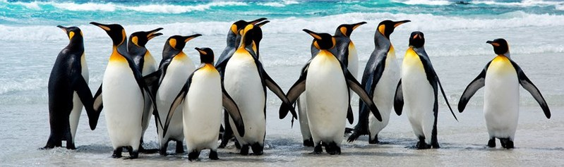 Linux Community Support is one of the advantages of Linux over Windows
