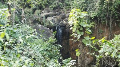 Photo of Kesarval Spring is an iconic water body in the heart of Goa