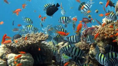 Photo of Coral reefs – Underwater treasure of Goa