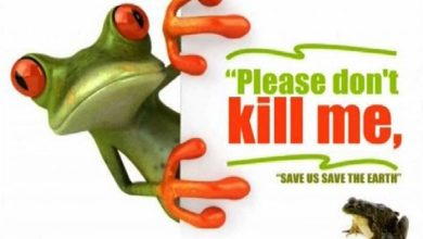 Photo of Save the frog – The ecosystem needs them more than you!