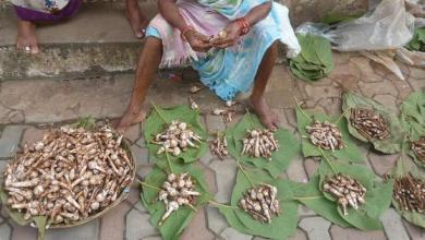 Photo of Wild Mushrooms – A Goan Delicacy