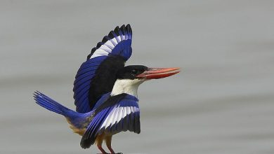 Photo of Goa to witness its first Bird festival