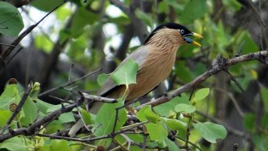 Photo of Salim Ali Bird Sanctuary rids itself of non-avian neighbour