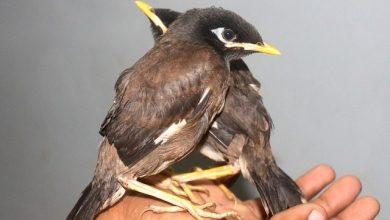 Photo of 'Goenchi Sukni' : Goa's first Konkani book on Birds of Goa