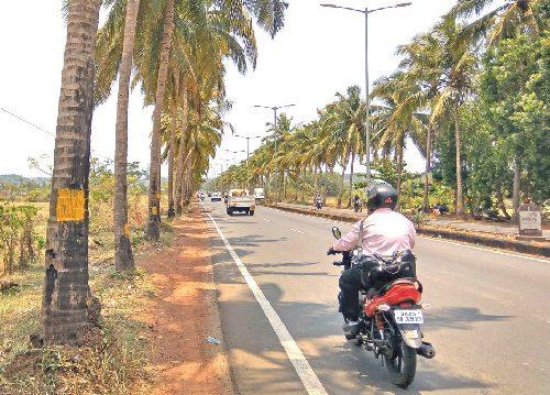 Guirim Coconut Trees