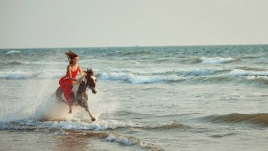 Photo of Horse rides and tours in Goa