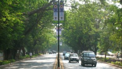 Photo of Biodiversity lines the streets of Panjim city in abundance