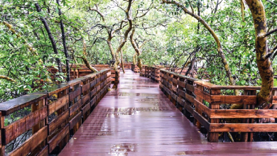 Photo of Taking a walk around Panjim's newest attraction, the Mangrove Boardwalk