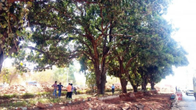 Photo of Goencho Avaaz and locals SAVE the 200-year-old mango trees outside Colvale